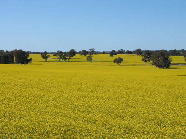 Bicycle_03 - canola2