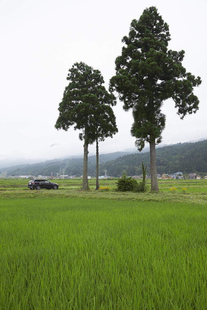 新潟県糸魚川市、根知の田園風景。里山の美しさに改めて気づく。